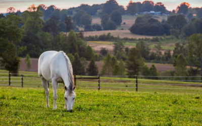 equestrian properties for sale chattanooga tn